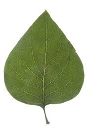 Plant Terminology Quiz