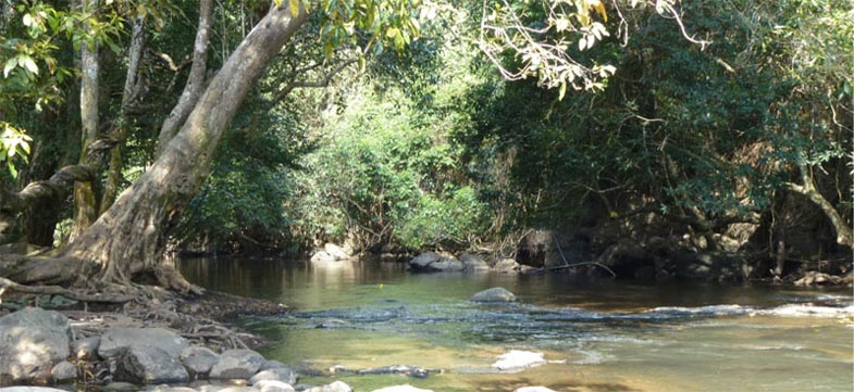 Photograph of river margin vegetation in Thailand